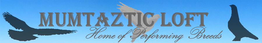 Mumtaztic Loft - Local Pigeon Breeders, Pigeon Classified